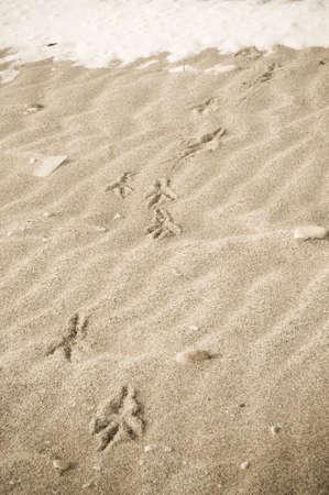 vogelspuren: Bird verfolgt in den Winter-sand