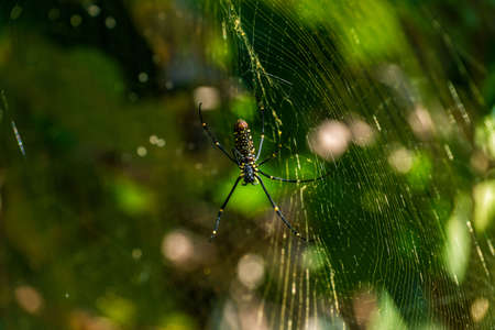Spider sur une sa toile