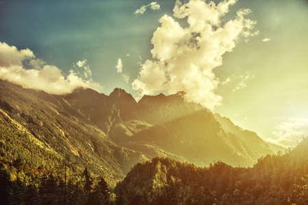 Les hautes montagnes couvertes d'arbres