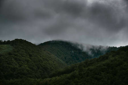Pente de montagne foretée dans les nuages ??bas avec les conifères à feuilles persistantes enveloppés de brume dans une vue panoramique du paysage.
