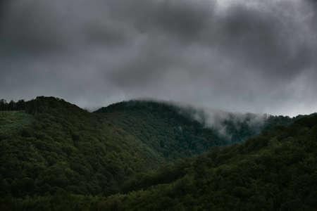 Pente de montagne foretée dans les nuages ??bas avec les conifères à feuilles persistantes enveloppés de brume dans une vue panoramique du paysage. Banque d'images - 81867372