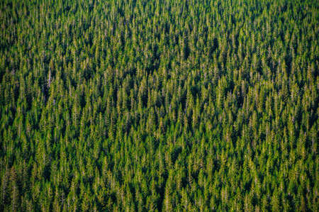 Summer warm sunlight over mountain forest. Aerial view. Reklamní fotografie