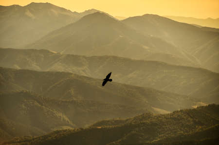 Silhouettes of mountains in the mist and bird flying in warm toning.