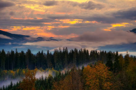 Scenic mountain landscape. View on the forest covered in fog. Colorful travel background.