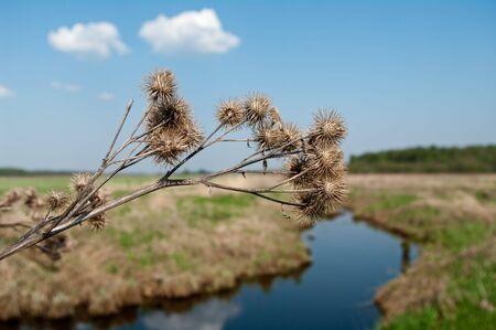 Dry burdock against a spring river landscape