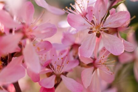 The flower of almonds allocated close up against the sky and others flowers