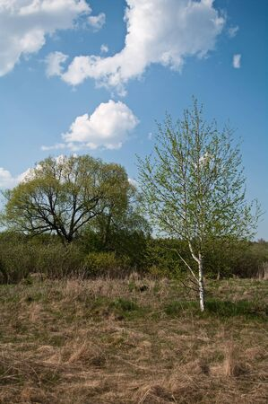 Two trees on a meadow under the cloudy sky Stock Photo