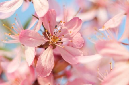 The flower of almonds allocated close up against the sky and others flowers Stock Photo