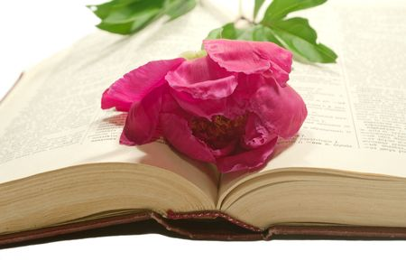 The peony lies on a turn of the turned yellow book Stock Photo