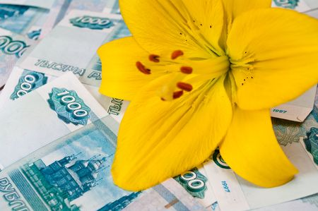 The yellow lily lays on the scattered denominations