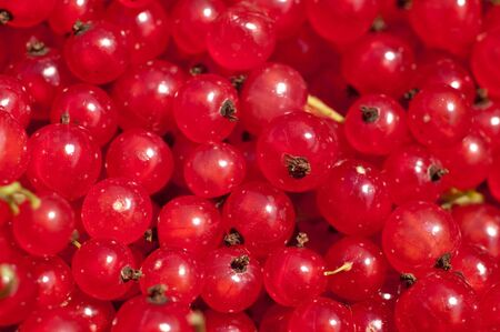 Background from a loose of a ripe red currant