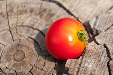 The red tomato lays on a dry stub