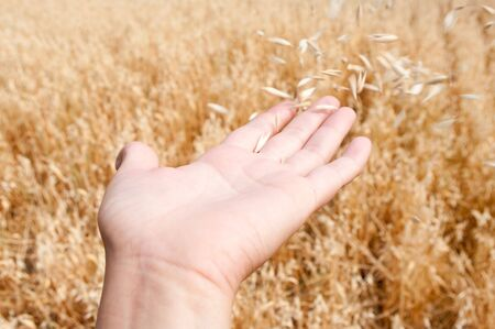 The wind blows off an oats from the opened palm Stock Photo