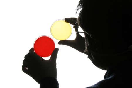 petri: Doctor analyzing petri dish