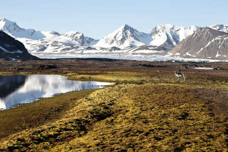 alpine tundra: Arctic summer landscape - Svalbard