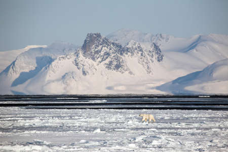 Arctic frozen landscape with Polar Bear photo