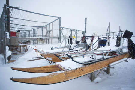 sled dog: Sled dogs have become a popular winter recreation