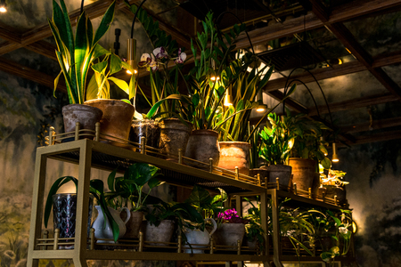 many different flowers in pots in the dark. Horizontal frame
