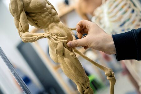 Hands of the master sculpt a sculpture of the human skeleton with muscles on a blurred background.