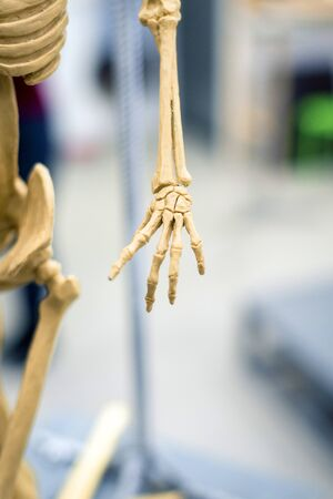 part of the sculpture of the human skeleton, hand on a blurred background.