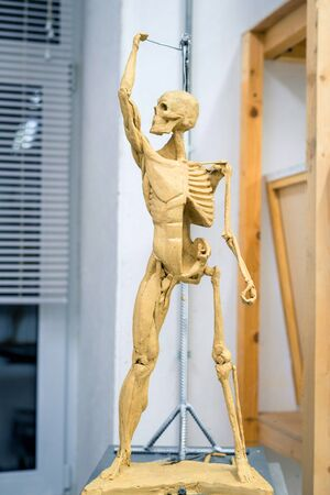 sculpture of the human skeleton with muscles on a blurred background.