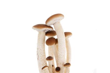 Mushrooms isolated on white background. Honey mushrooms close-up on a white background. Foto de archivo