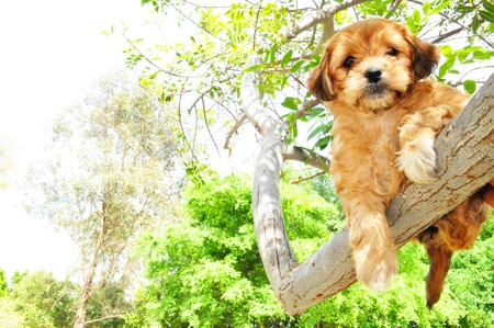 Cute dog resting in a tree branch above like cat