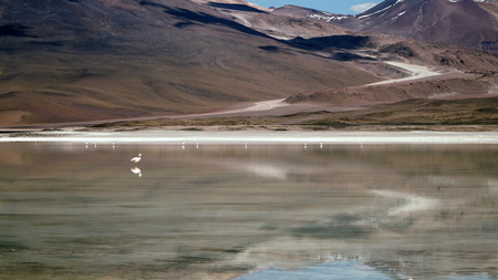 Mountain Reflecting In The Lake With Flamingos, Bolivia