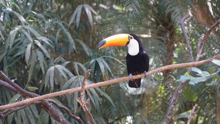 Toucan Bird Stockfoto