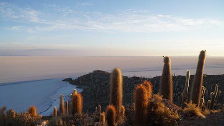 Cactus On Rock Formation In Desert Against Blue Sky, Salar De Uyuni, Bolivia Stockfoto