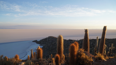 Cactus On Rock Formation In Desert Against Blue Sky, Salar De Uyuni, Bolivia 写真素材