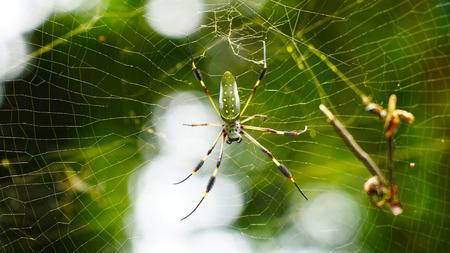森の中の巨大なクモ