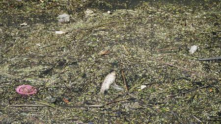 都市の水質汚染 写真素材