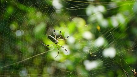 ジャイアントスパイダーとクモの巣