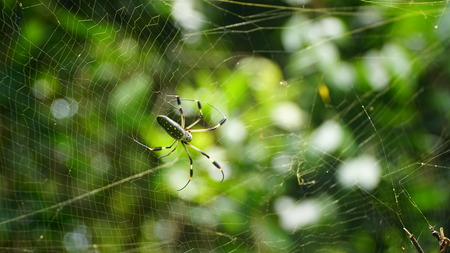 Giant Spider and Spider Web