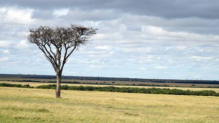 Savannah Plains and Acacia Trees Stockfoto