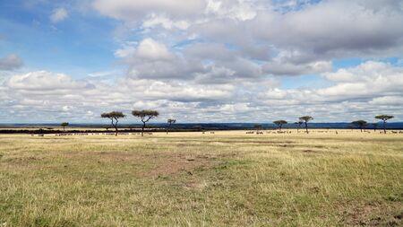 Savanna and Grass Fields in Kenya, Africa Stockfoto