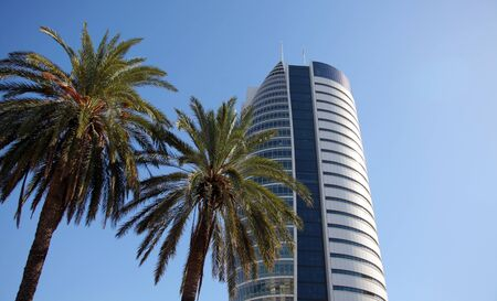 Skyscrapers and Palm Trees