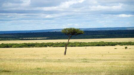 Savannah of Africa with Acacia Trees