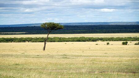 Savanna and Grass Fields in Africa