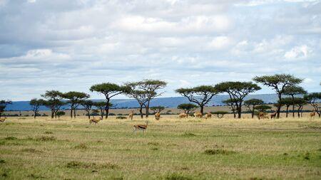 Safari Animals in African Savanna