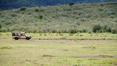 African Wildlife Safari in Grassland Savanna