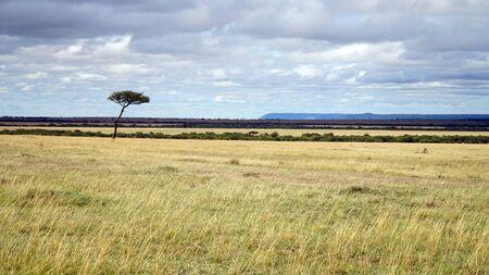 Typical Savannah with Acacia Trees in Kenya Africa