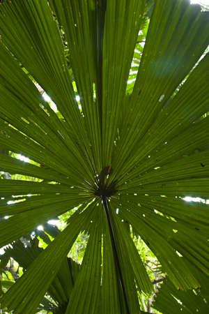 A huge leaf blocking the sun light photo
