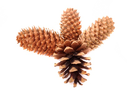 Fur-tree and pine cones on a white background photo