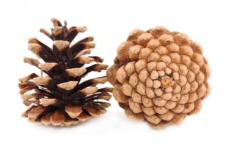 pine branches: Fur-tree and pine cones on a white background Stock Photo