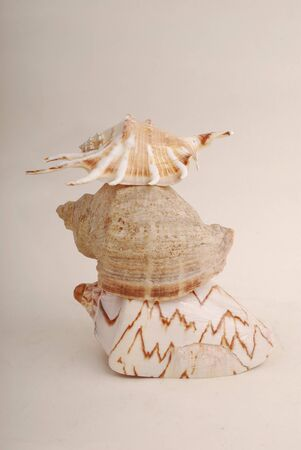 Sea shell with  reflection against white background photo