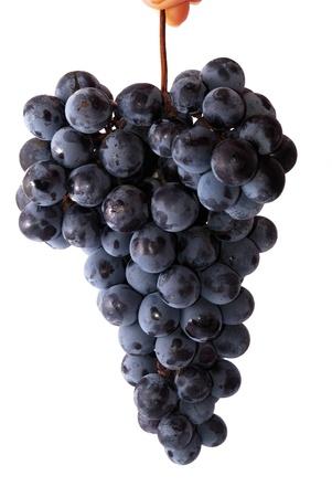 wei�e trauben: Bunch of blauen Trauben auf dem wei�en Hintergrund isoliert