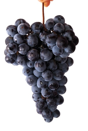 clusters: Bunch of blue grapes isolated on the white background Stock Photo