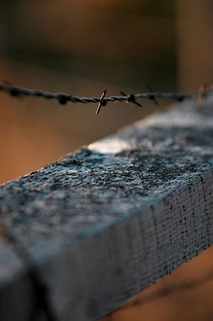 cattle wire wires: Barbed Wire Fence